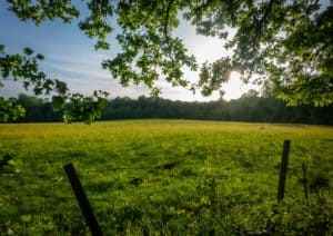 Meadow In Summer